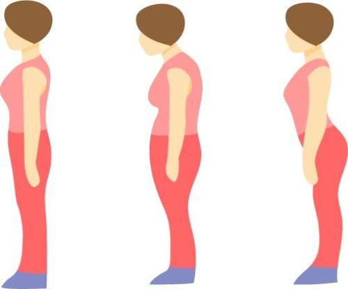 姿勢と体型