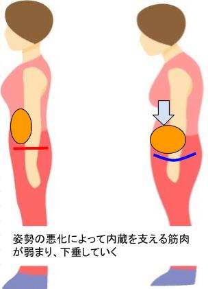 お腹の下垂