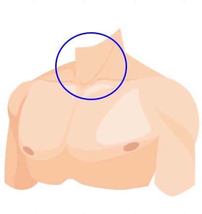頸部屈筋群